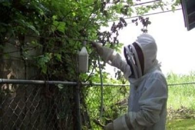 Bee Removal | Budget Bee Control