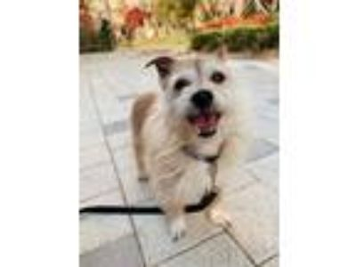 Adopt Dale a Terrier