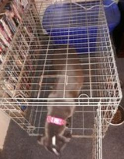 Collapsible Single Door Wire Dog Crate