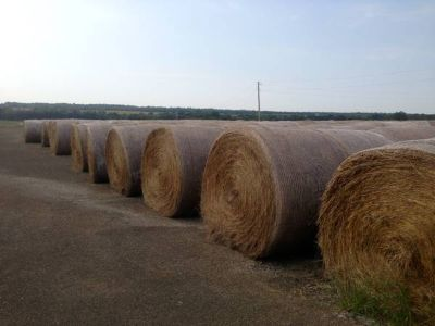 HAY FOR SALE  Round Bales