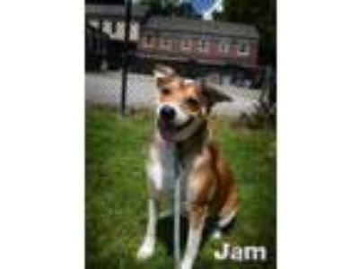 Adopt Jam a Tan/Yellow/Fawn Terrier (Unknown Type, Small) / Mixed dog in