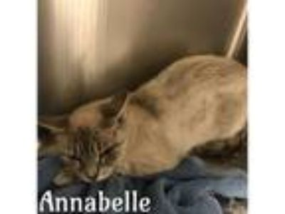 Adopt ANNABELLE a White Domestic Shorthair / Mixed (short coat) cat in Macon