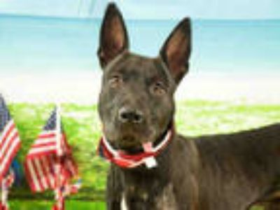 Adopt PYTHON a Black Terrier (Unknown Type, Medium) / Mixed dog in Fort