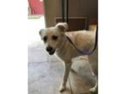 Adopt Ollie a Tan/Yellow/Fawn Mixed Breed (Small) / Mixed dog in St.