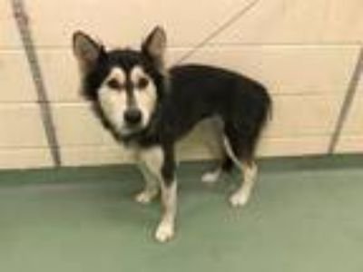 Adopt WINTER a Mixed Breed