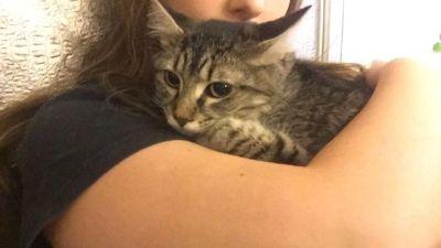 Adopt Callie!