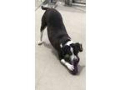 Adopt Zak a Hound, Terrier