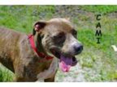 Adopt Cami a Gray/Blue/Silver/Salt & Pepper Mixed Breed (Medium) / Mixed dog in
