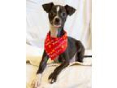 Adopt Dio a Mixed Breed