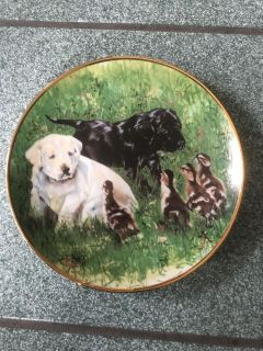 Woodmere ColectableLabrador puppy China plate 8.5 inches