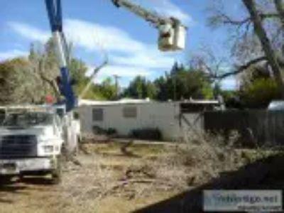 Tree Stump removal Tree Trimming Service Tree Doctor Arborist Q