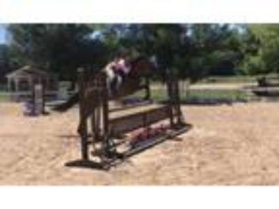 Price reduced safe and sane warmblood