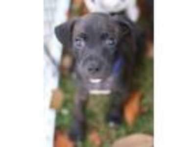 Adopt Rocky a Brindle Terrier (Unknown Type, Small) / Mixed dog in E.