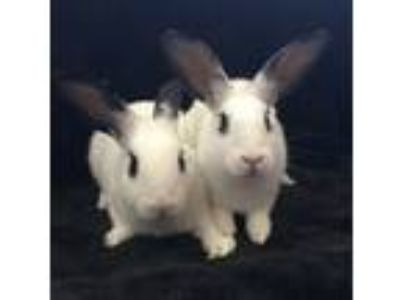 Adopt Cypress & Magnolia a Bunny Rabbit