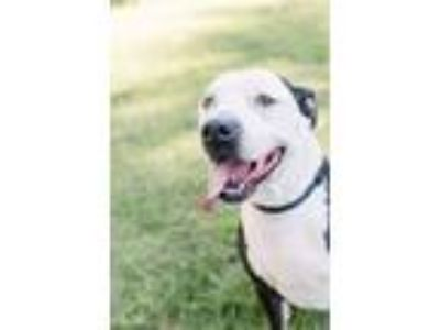 Craigslist - Dogs for Adoption Classifieds in Bradford