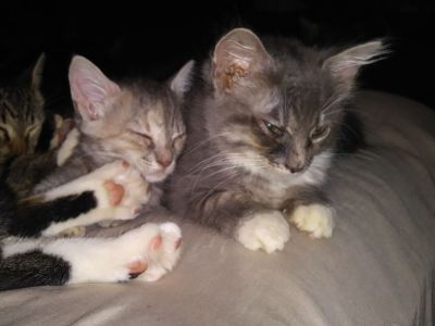 8 cute & loving kittens 4 free