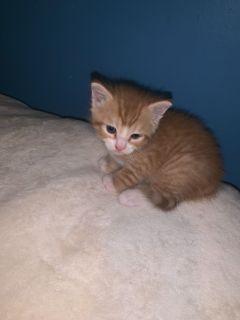 Kittens - Southington Classifieds - Claz org