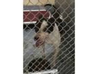 Adopt Ace a Black Mixed Breed (Large) / Mixed dog in St. Martinville