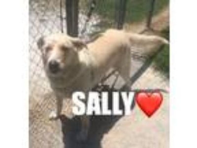 Adopt Sally-Siloam Springs a Labrador Retriever