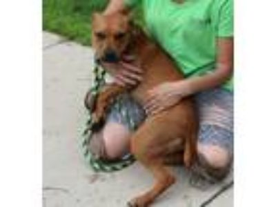 Adopt JAYLA a Mixed Breed