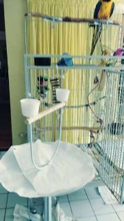 Blue/Gold Macaw with large cage and playstand