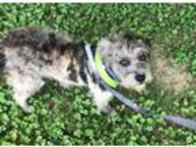 Adopt Pebbles in KY a Terrier (Unknown Type, Medium) / Mixed dog in Providence
