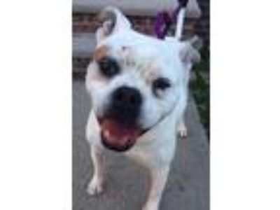 Adopt Danny Boy *URGT IMMED FOSTER HOME NEEDED* a White - with Tan