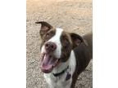 Adopt BANDIT a Border Collie