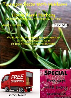 FREE shipping & a free gift when you order Tarragon (French) Heirloom Seeds now