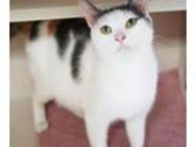 Adopt Tammy - the SWEETEST kitty of them all!! SUPER LOVER!!