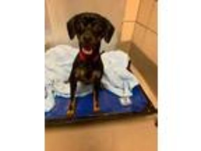 Adopt Papies a Black Terrier (Unknown Type, Small) / Mixed dog in Alpharetta