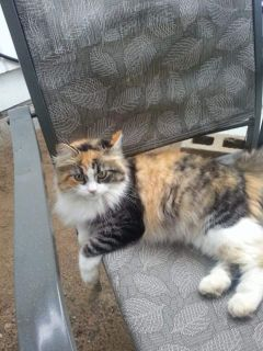 Lost..Has anyone seen my cat she has been gone for 2 months now but i heard that a lady in Southampton might have her but wont let her out.