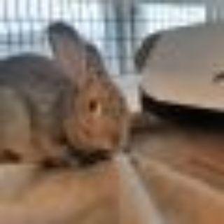 Michaela Bunny Rabbit Rabbit