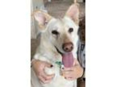 Adopt Mirabelle a German Shepherd Dog