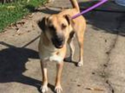 Adopt Mama a Black Mouth Cur, Shepherd