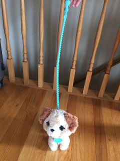Puppy on a leash!