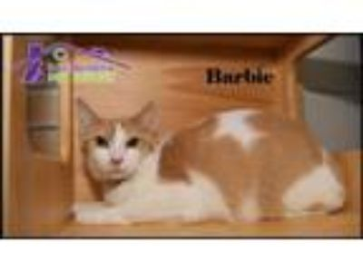 Adopt Barbie a Domestic Short Hair