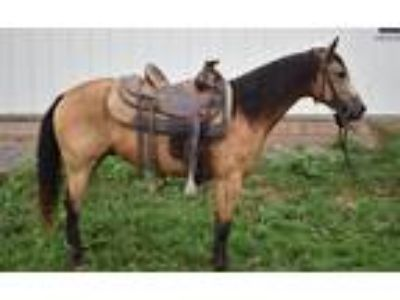 Flashy Quarter Pony Gelding