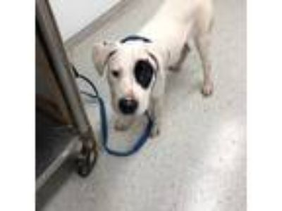 Adopt Froyo a White Terrier (Unknown Type, Small) / Mixed dog in Indianapolis