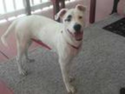 Adopt Quincy a White Mixed Breed (Medium) / Mixed dog in Lakeland, FL (25547536)