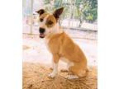 Adopt Candy a Mixed Breed