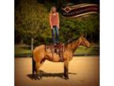 Stunning Gentle Buckskin Ranch Riding Show Experience and Trails