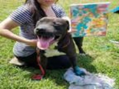 Adopt WILLIE a Staffordshire Bull Terrier, Mixed Breed