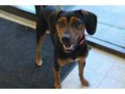 Adopt Trevor a Black Terrier (Unknown Type, Small) / Mixed dog in Albany