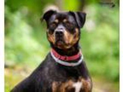 Adopt journey a Rottweiler, Terrier