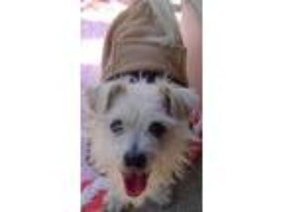 Adopt Caspar a Terrier