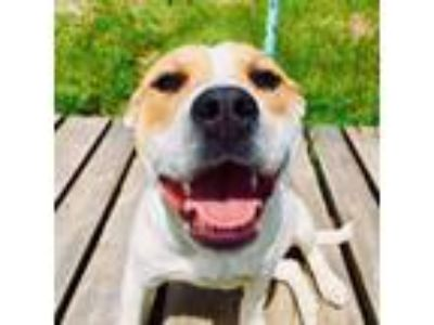 Adopt Macy a Mixed Breed