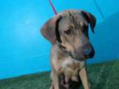 Adopt NALA a German Shepherd Dog, Mixed Breed