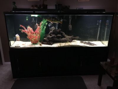 260g fish tank set up for sale