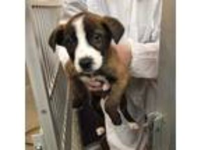 Adopt Walrus a Mixed Breed (Medium) / Mixed dog in Fort Lupton, CO (25640760)